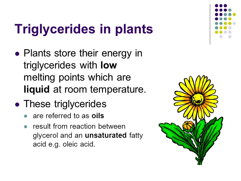 Triglycerides in plants