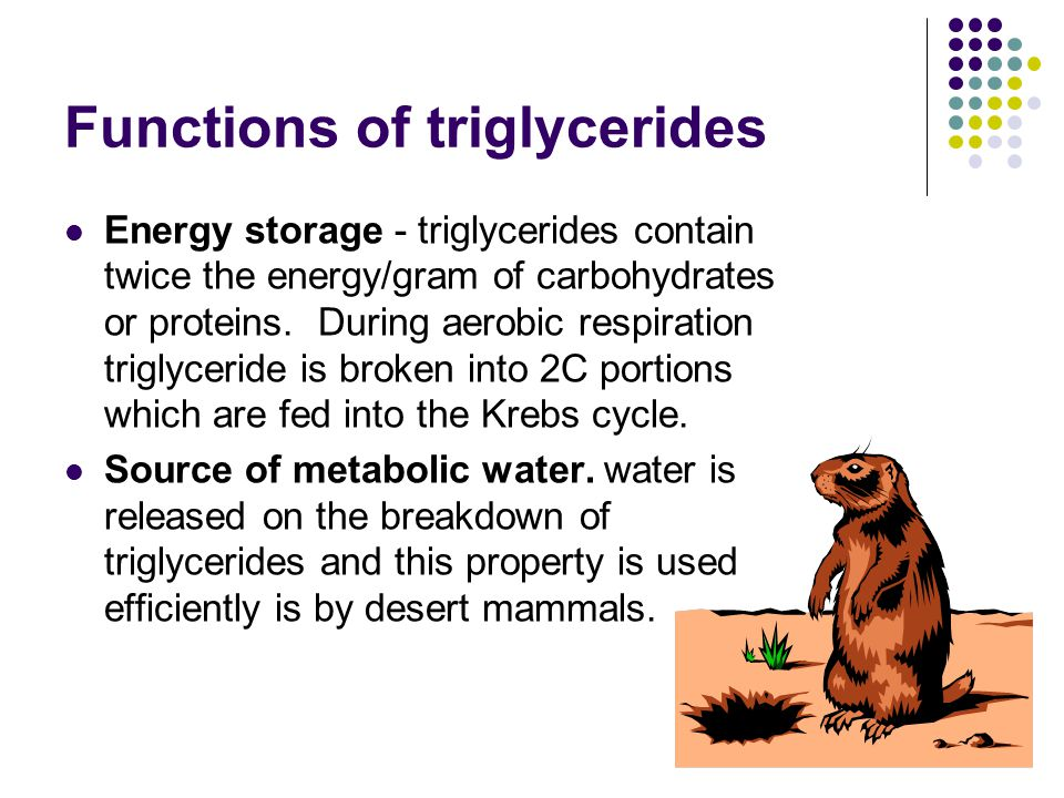 Functions of triglycerides