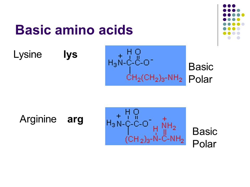 Basic amino acids Lysine lys Basic Polar Arginine arg Basic Polar