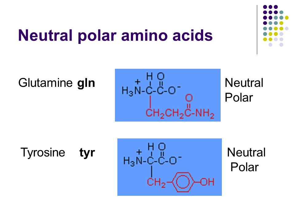 Neutral polar amino acids