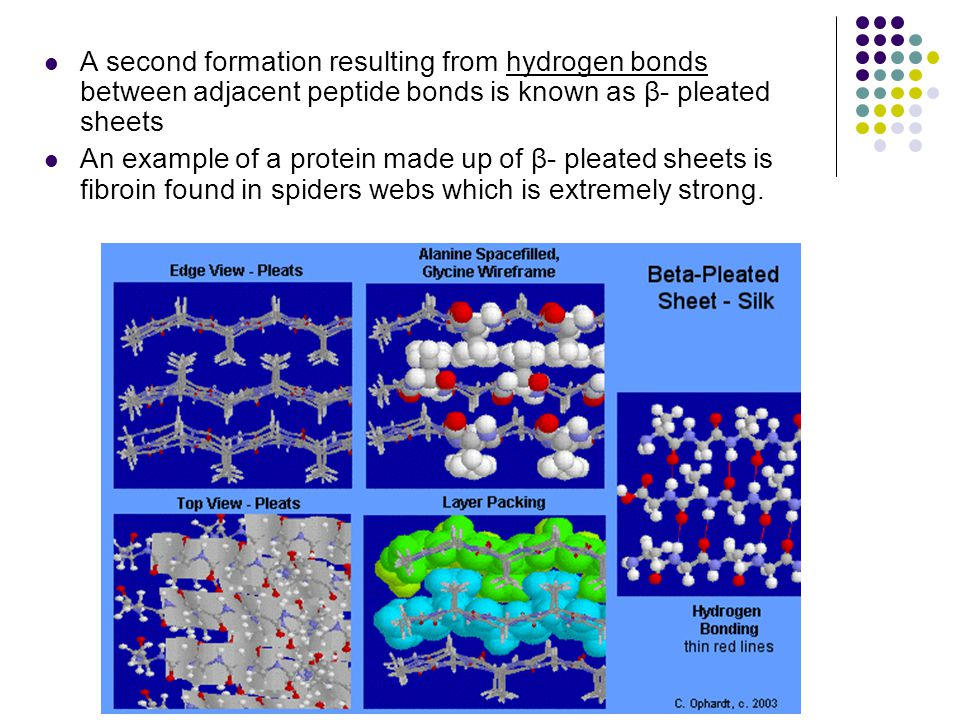 A second formation resulting from hydrogen bonds between adjacent peptide bonds is known as β- pleated sheets