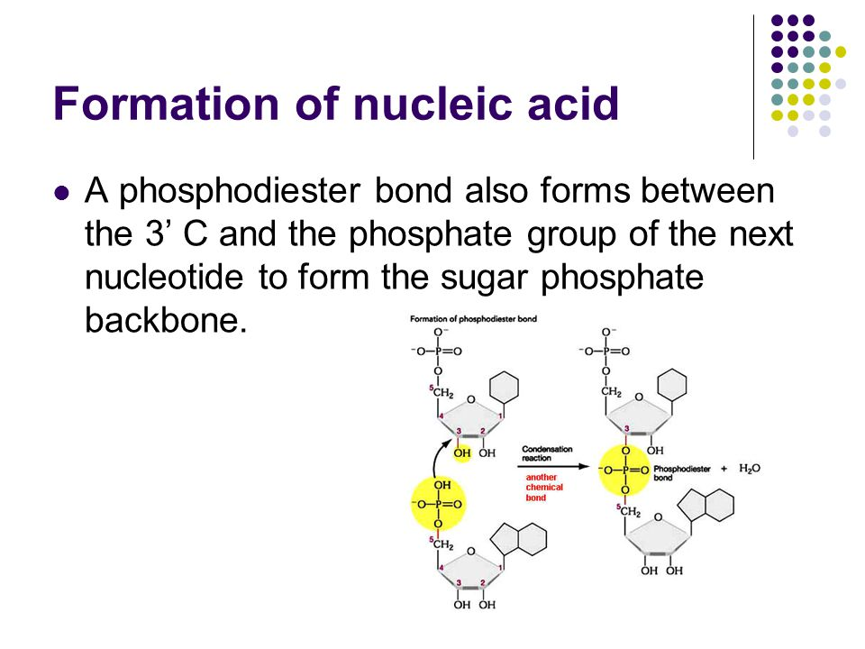 Formation of nucleic acid