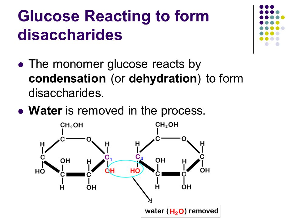 Glucose Reacting to form disaccharides