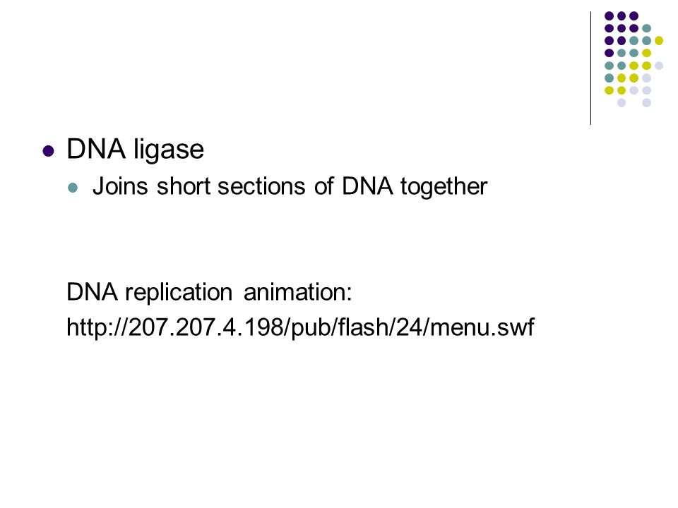 DNA ligase Joins short sections of DNA together