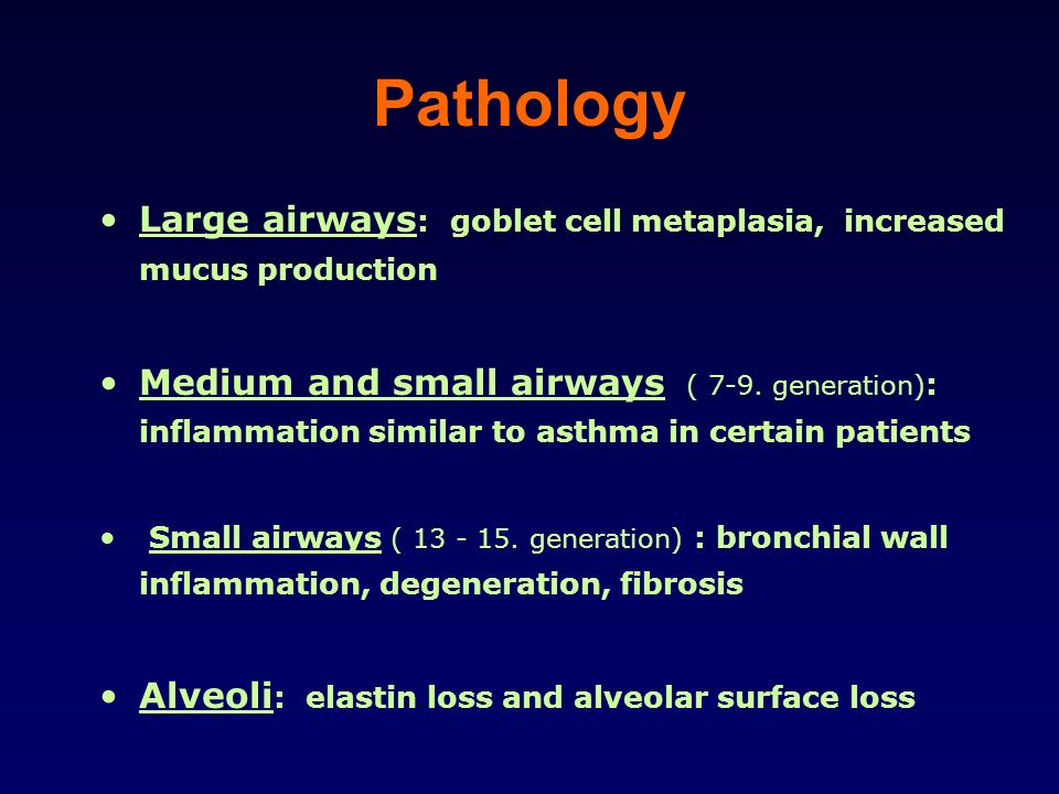 Pathology Large airways: goblet cell metaplasia, increased mucus production.
