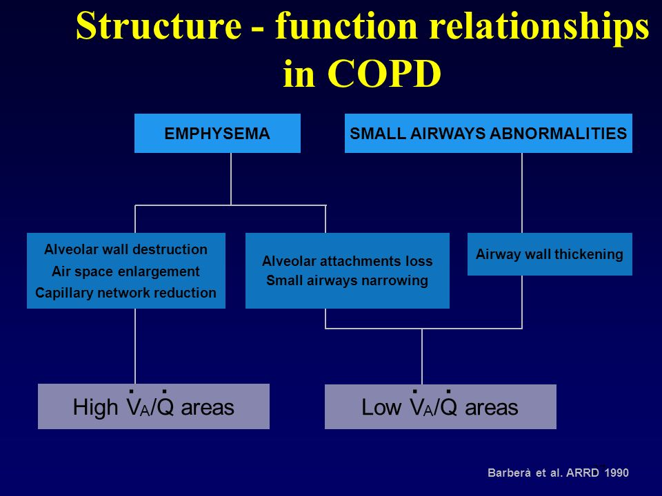 Structure - function relationships in COPD