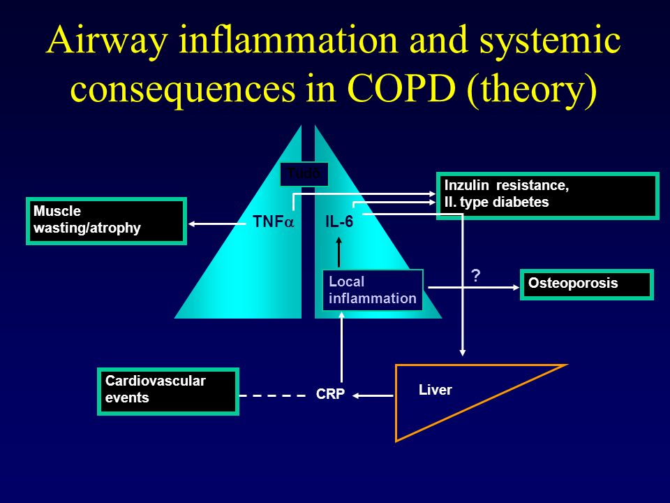 Airway inflammation and systemic consequences in COPD (theory)