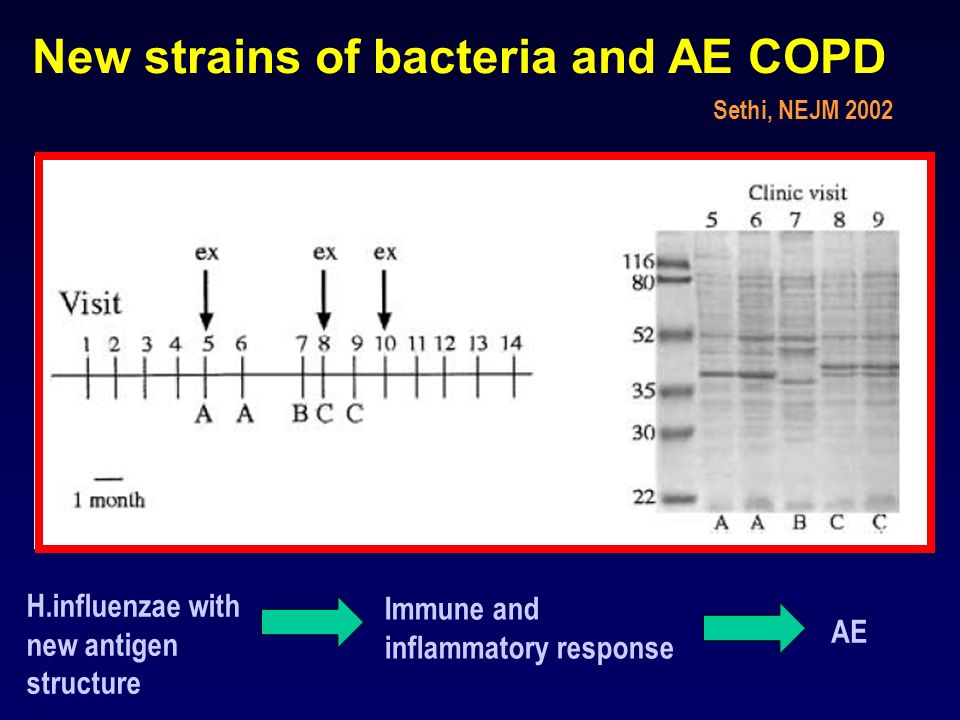 New strains of bacteria and AE COPD