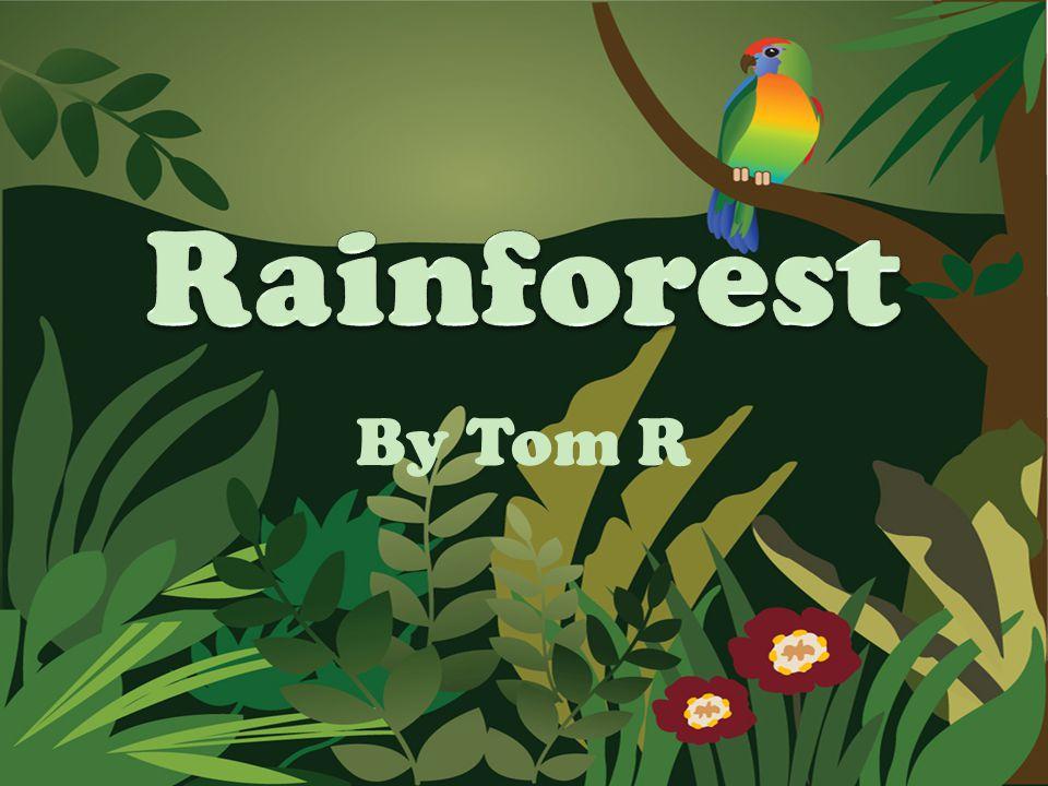 Rainforest By Tom R