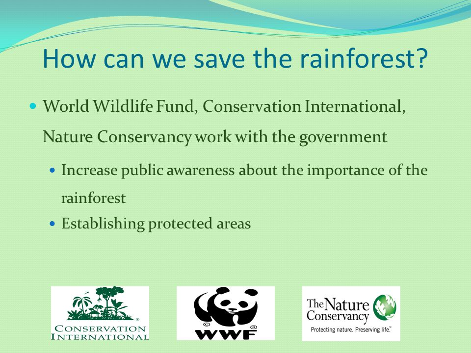 How can we save the rainforest