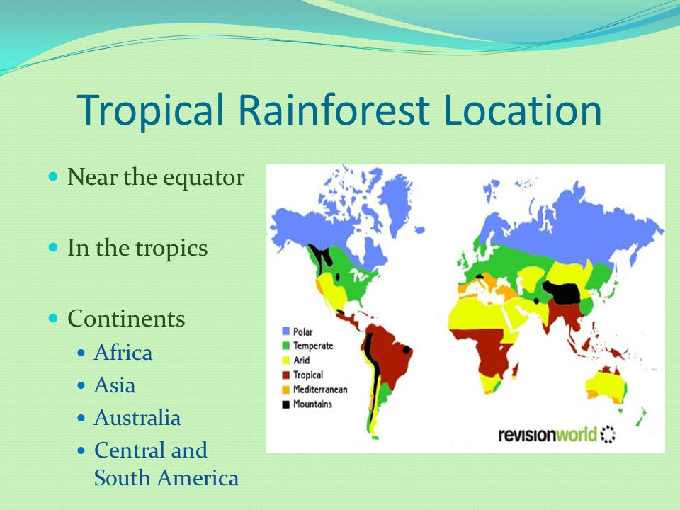 Rainforest By Tom R. - ppt download