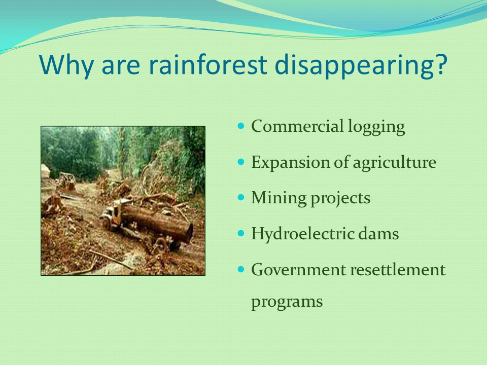 Why are rainforest disappearing