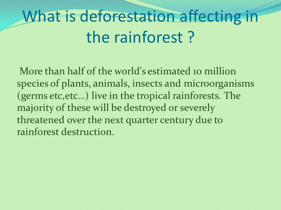 What is deforestation affecting in the rainforest