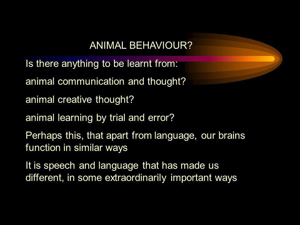 ANIMAL BEHAVIOUR Is there anything to be learnt from: animal communication and thought animal creative thought
