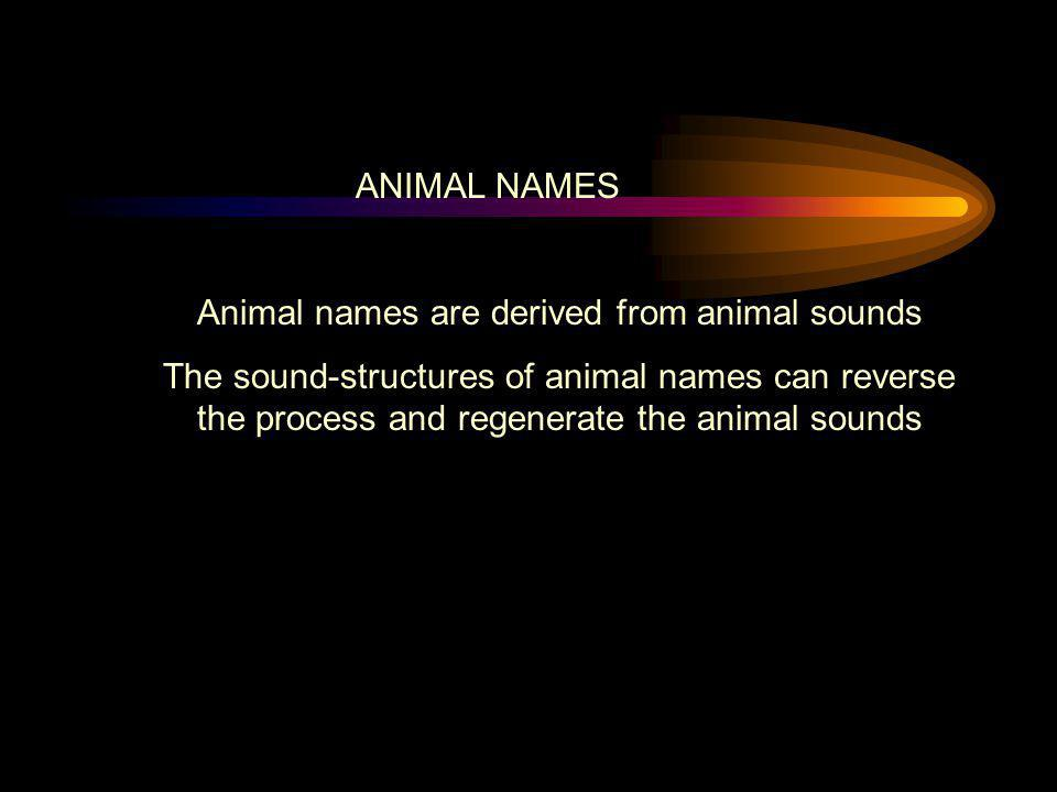 Animal names are derived from animal sounds