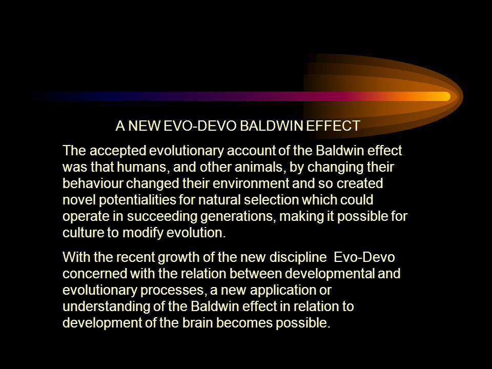 A NEW EVO-DEVO BALDWIN EFFECT
