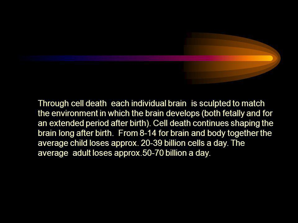Through cell death each individual brain is sculpted to match the environment in which the brain develops (both fetally and for an extended period after birth).