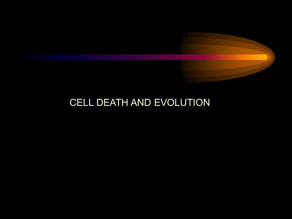 CELL DEATH AND EVOLUTION