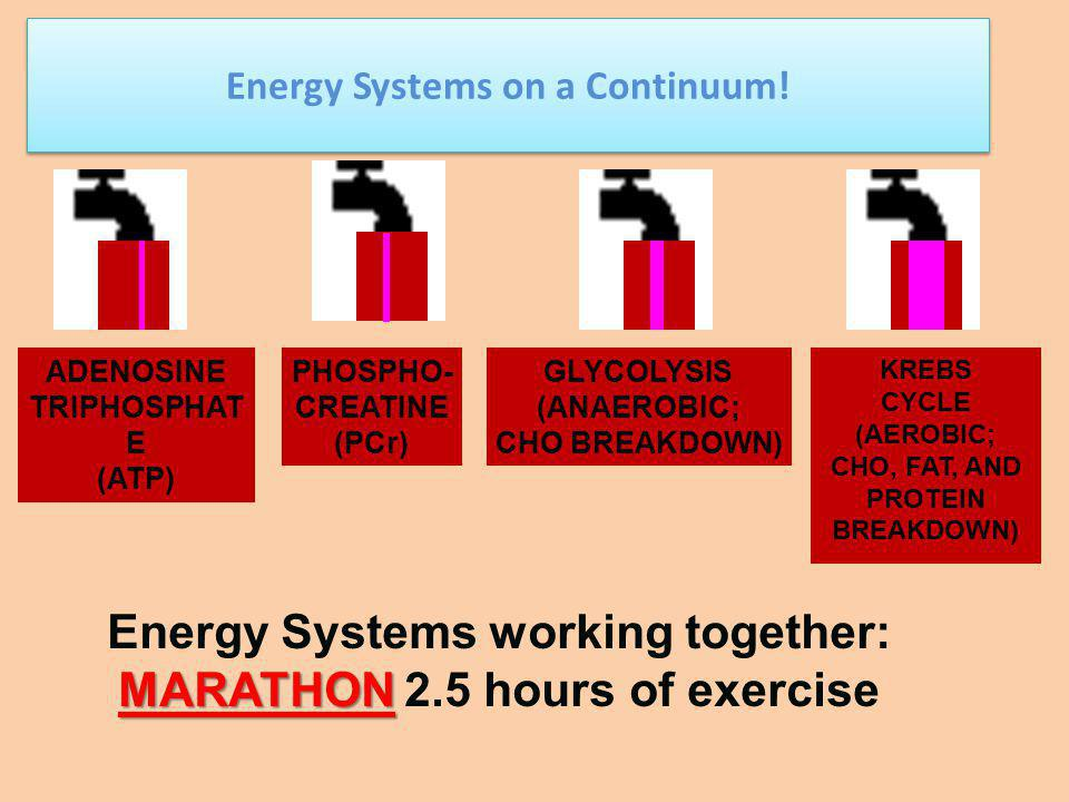 Energy Systems working together: MARATHON 2.5 hours of exercise