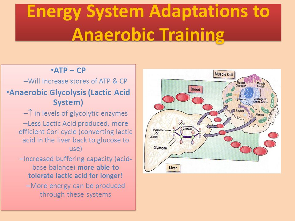 Energy System Adaptations to Anaerobic Training