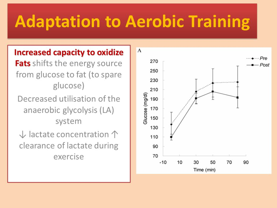 Adaptation to Aerobic Training