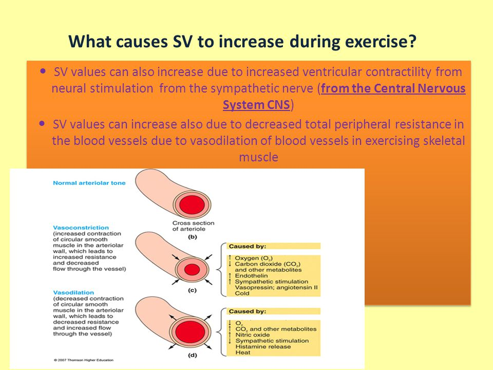 What causes SV to increase during exercise