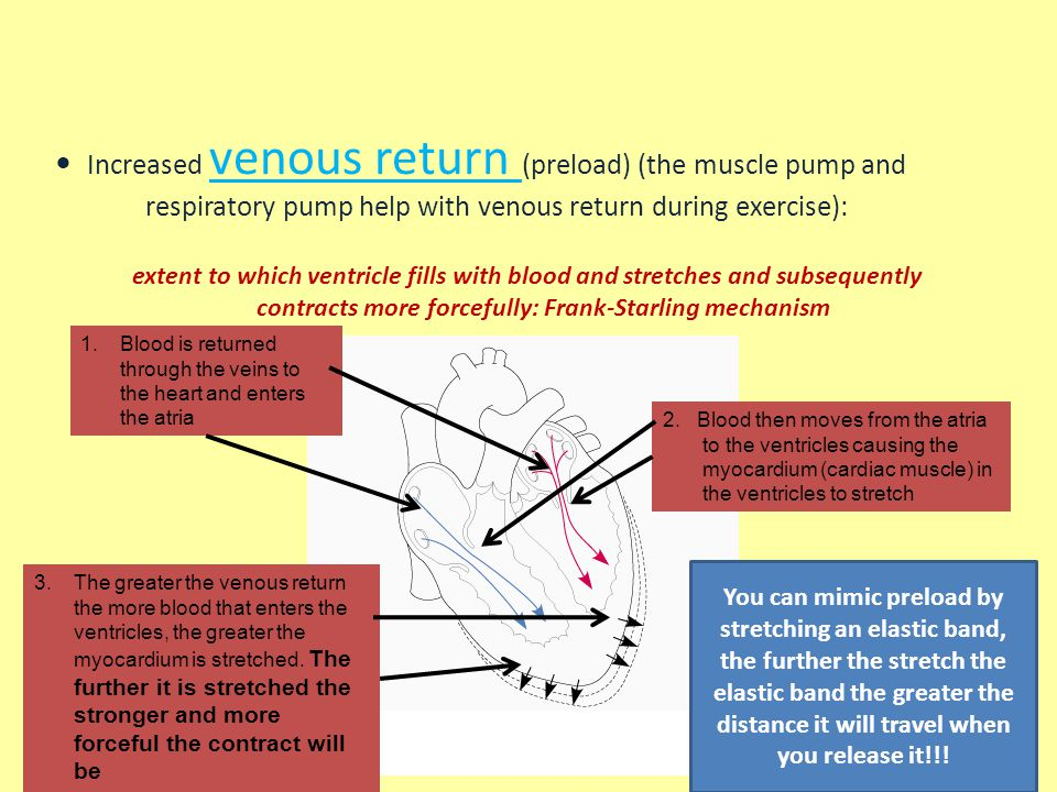 Increased venous return (preload) (the muscle pump and respiratory pump help with venous return during exercise):