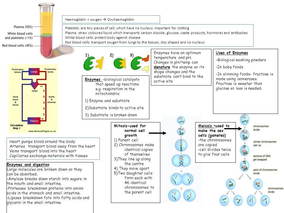 Haemoglobin + oxygen  Oxyhaemoglobin
