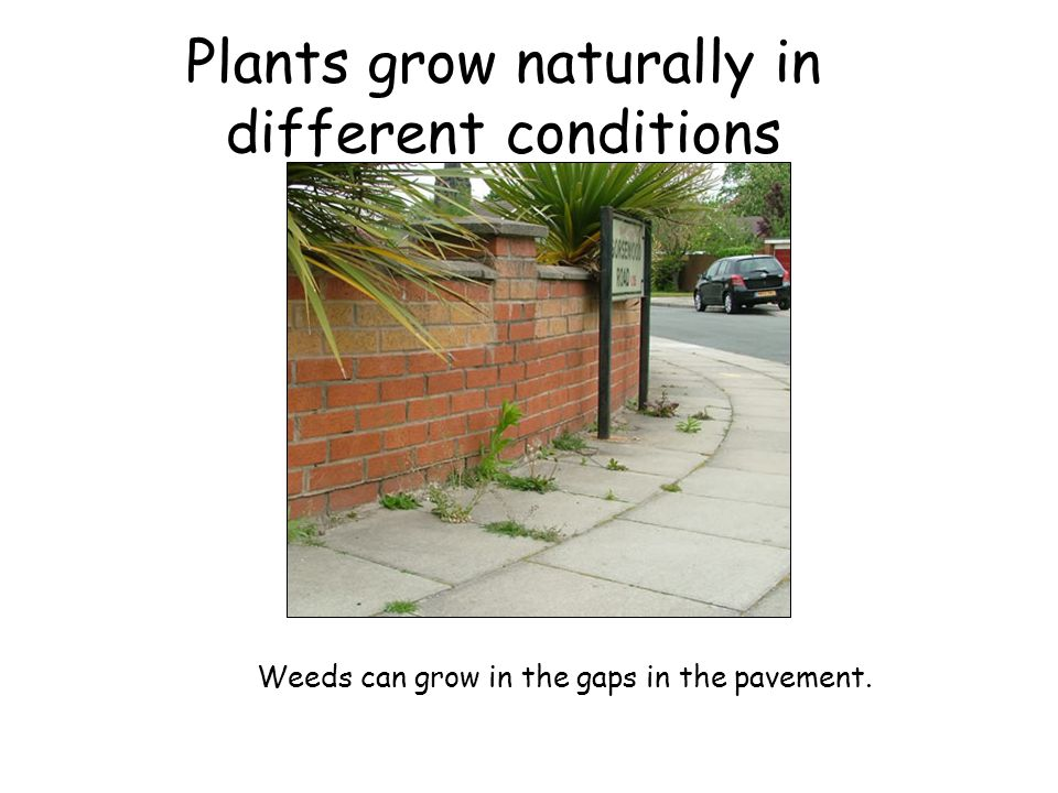 Plants grow naturally in different conditions