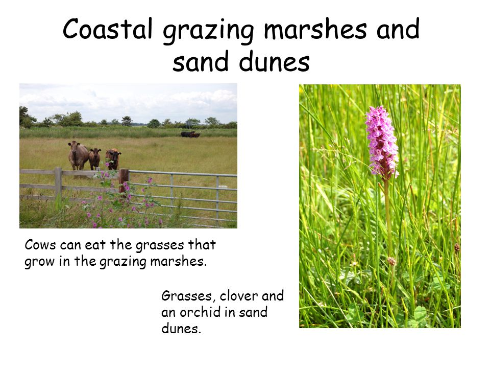 Coastal grazing marshes and sand dunes