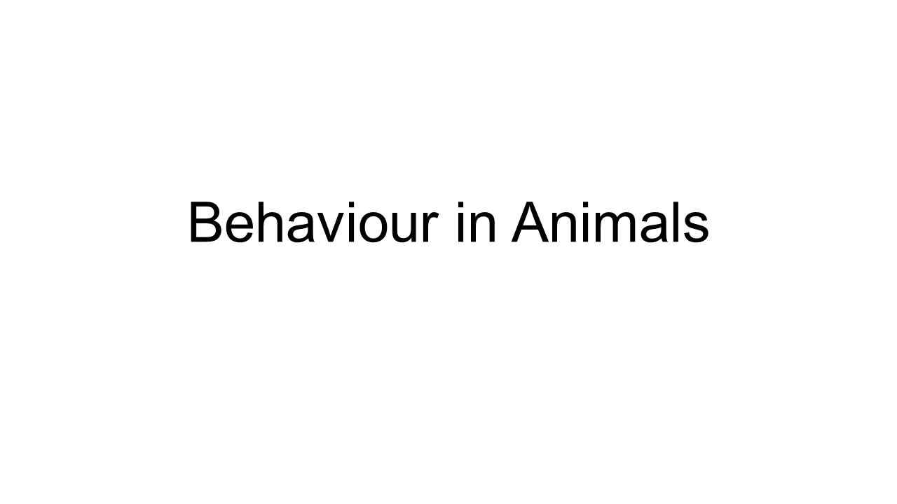 Behaviour in Animals