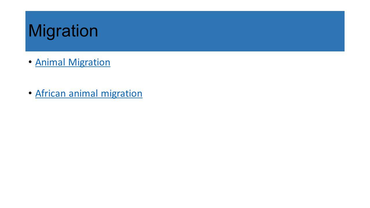 Migration Animal Migration African animal migration