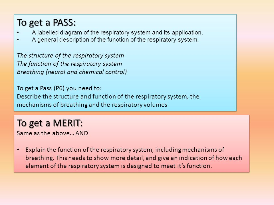 To get a PASS: To get a MERIT: The structure of the respiratory system