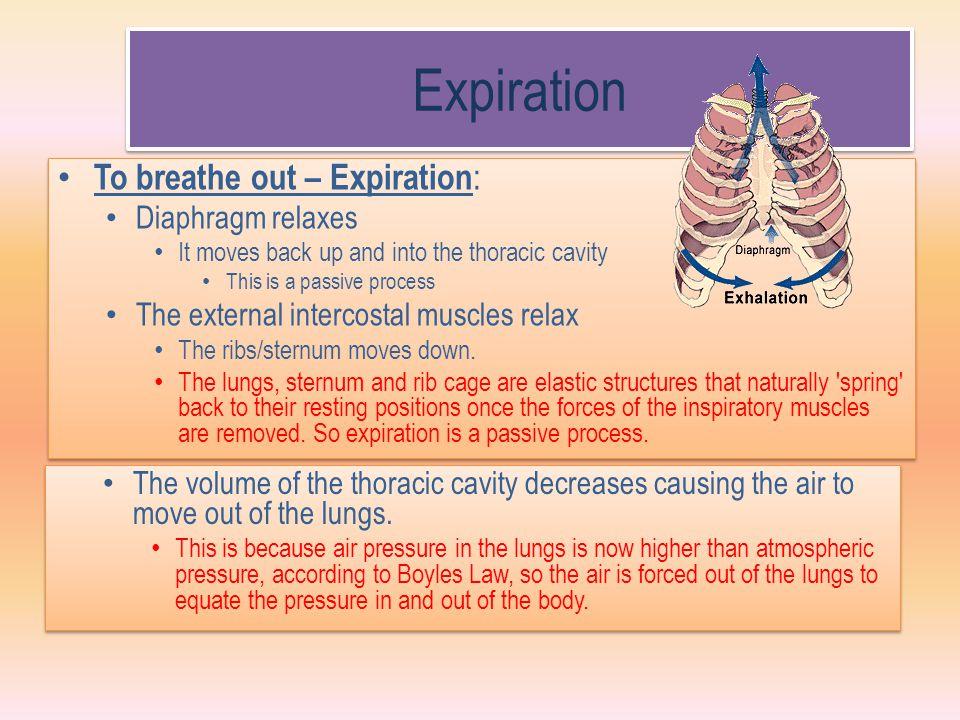 Expiration To breathe out – Expiration: Diaphragm relaxes