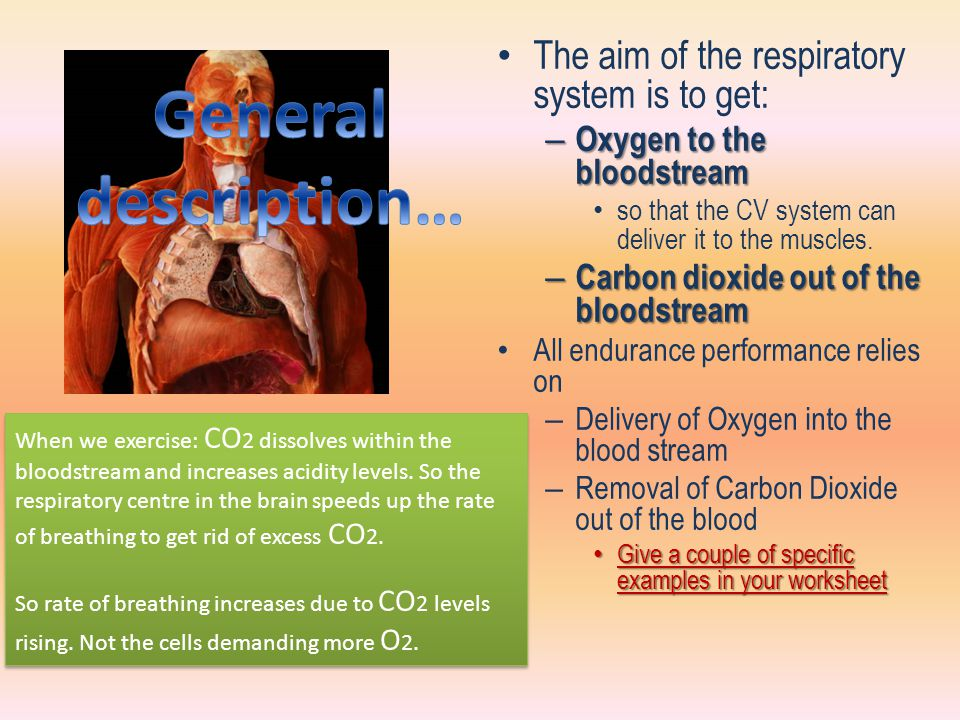 General description… The aim of the respiratory system is to get: