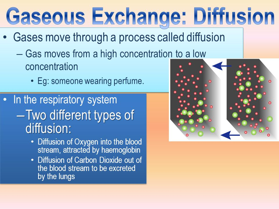 Gaseous Exchange: Diffusion
