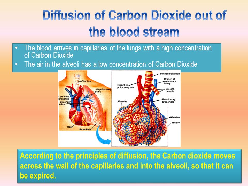 Diffusion of Carbon Dioxide out of the blood stream