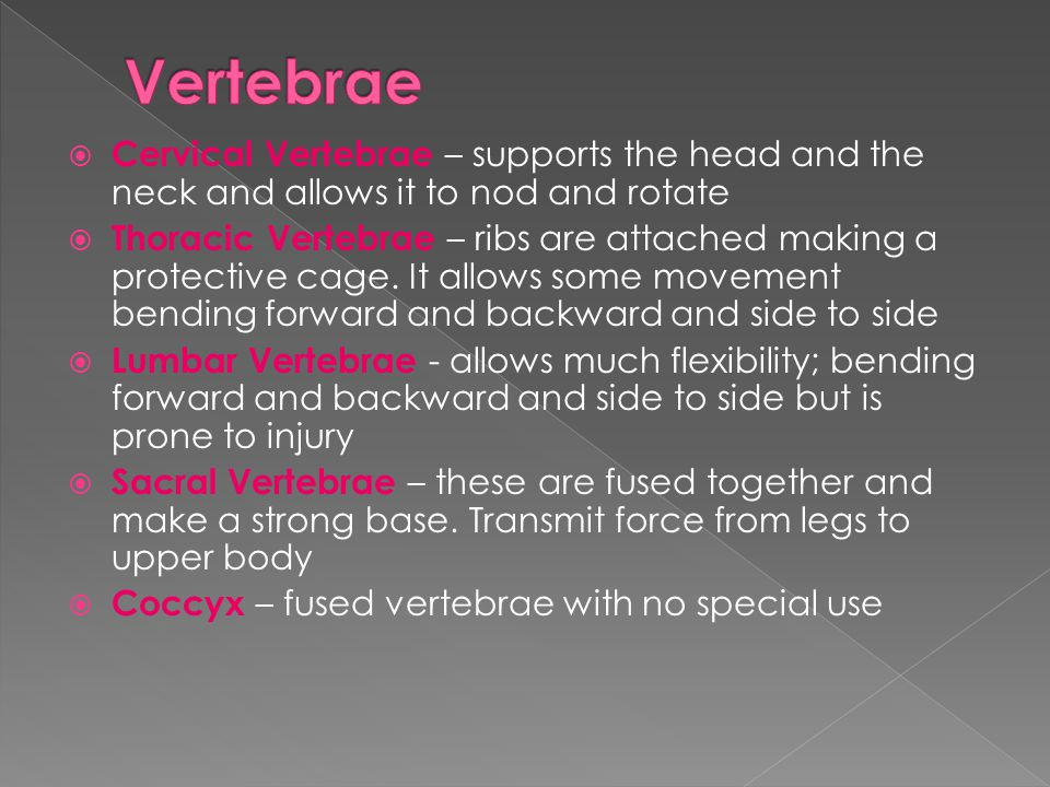 Vertebrae Cervical Vertebrae – supports the head and the neck and allows it to nod and rotate.