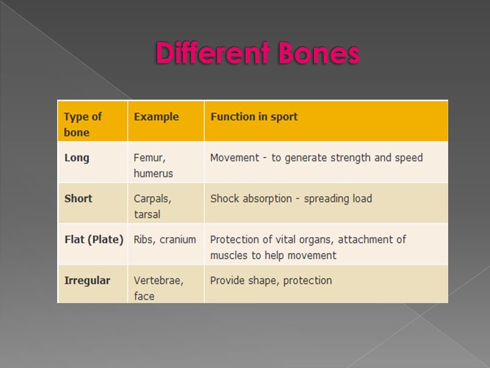 Different Bones