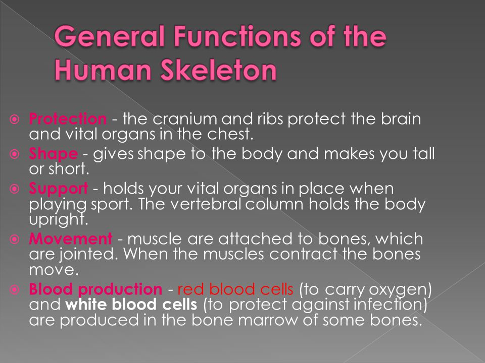 General Functions of the Human Skeleton