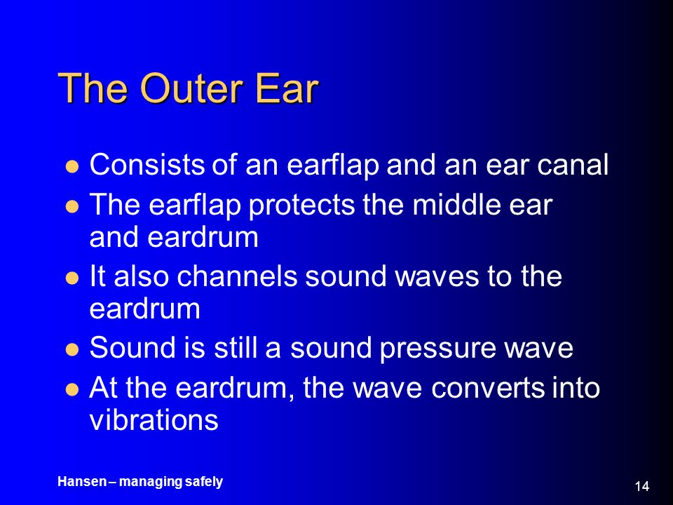The Outer Ear Consists of an earflap and an ear canal