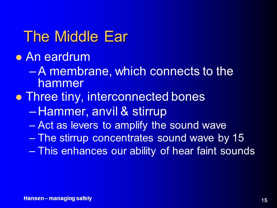 The Middle Ear An eardrum A membrane, which connects to the hammer