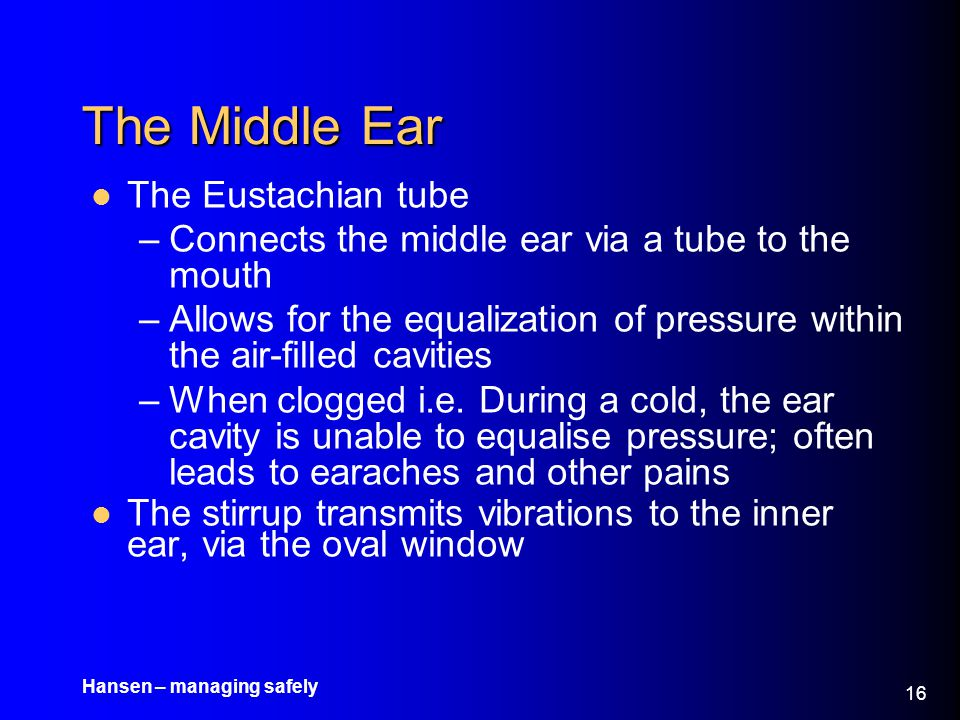The Middle Ear The Eustachian tube