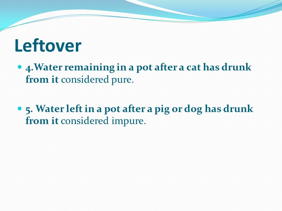 Leftover 4.Water remaining in a pot after a cat has drunk from it considered pure.