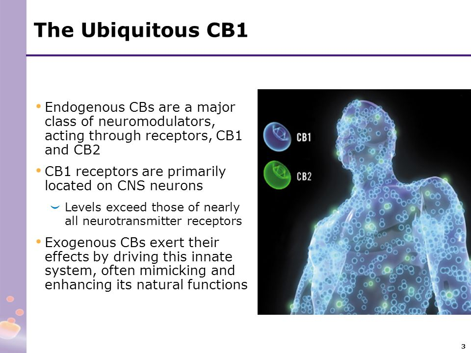The Ubiquitous CB1 Endogenous CBs are a major class of neuromodulators, acting through receptors, CB1 and CB2.