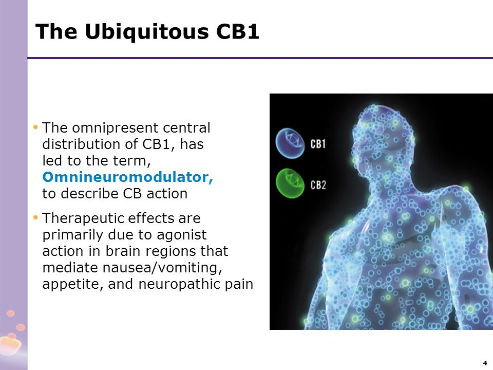 The Ubiquitous CB1 The omnipresent central distribution of CB1, has led to the term, Omnineuromodulator, to describe CB action.