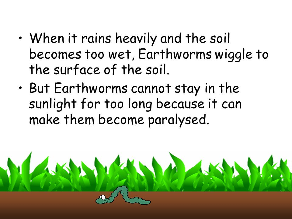 When it rains heavily and the soil becomes too wet, Earthworms wiggle to the surface of the soil.