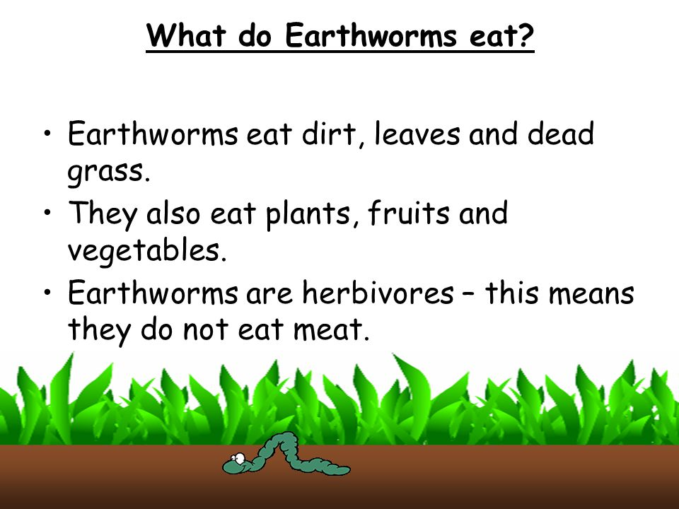 What do Earthworms eat Earthworms eat dirt, leaves and dead grass. They also eat plants, fruits and vegetables.