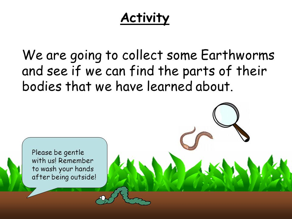 Activity We are going to collect some Earthworms and see if we can find the parts of their bodies that we have learned about.
