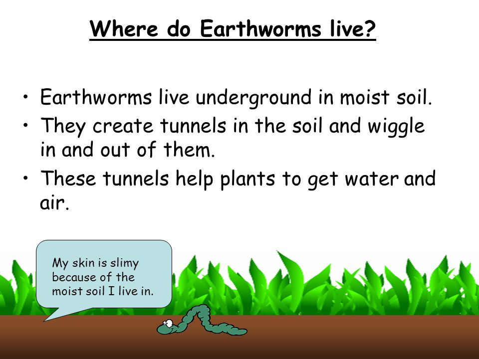 Worms ppt video online download for Where do we find soil
